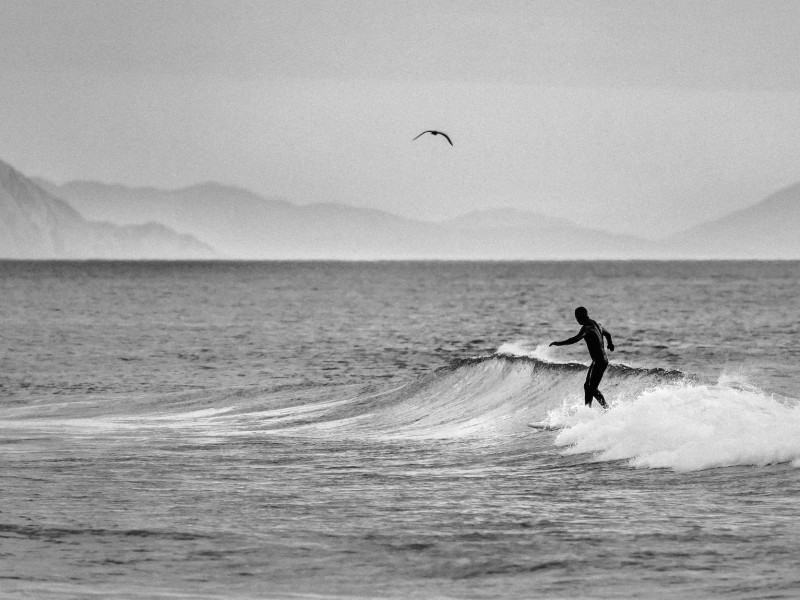 Leto - surfbird